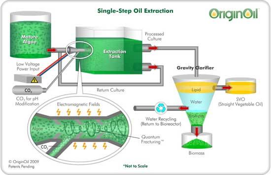 Algae Energy Without Carbon